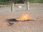 恒春の出火奇観でポップコーンのおこぼれを狙う鳩